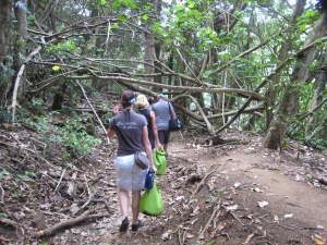 Hike through the rainforest
