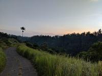 Campuhan Ridge trail